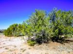 APN 205-27-042B juniper trees
