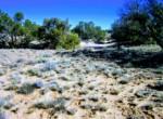 APN 205-27-042B vegetation