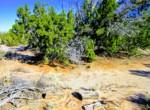 APN 205-13-009 juniper trees