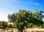 APN 201-81-225 Juniper Tree