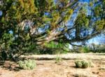 APN 205-13-067 Cactus 2