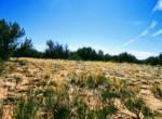 APN 205-13-067 Vegetation