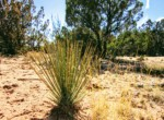 APN 205-13-067 Yucca Cactus
