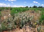 APN 206-05-125 Cactus