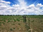 APN 206-05-125 Fence east border