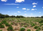 APN 206-05-125 Vegetation