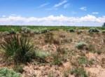 APN 206-05-125 Yucca Cactus