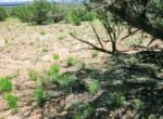 APN 205-74-007 Vegetation
