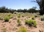 205-13-043A Vegetation