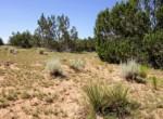 205-13-043A Yucca