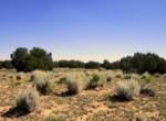 205-13-043B Vegetation