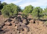 APN 201-35-007 Vegetation Yucca (2)