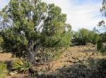 APN 201-35-007 Yucca