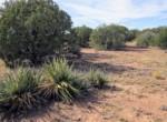 APN 201-35-007 Yucca vegetation