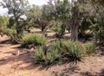 APN 201-35-007 yucca (2)