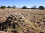APN 201-36-010A Cactus