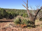 APN 201-36-010A Large Yucca