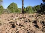 APN 201-36-010A Prickley Pear cactus