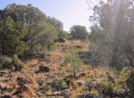 APN 201-36-010A Vegetation (3)