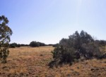 APN 201-36-010A Vegetation (6)