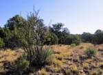 APN 201-36-010A Yucca cactus
