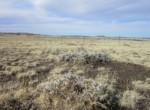 107-63-002h Cactus fields