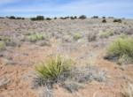 210-12-014 Yucca cactus