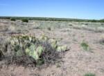 108-56-148 Cactus