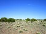 108-56-154 Vegetation