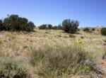 207-65-002 Vegetation