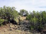 202-26-002 Boulder vegetation